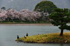 Fjädra i den Daikakuji templet, Sagano Kyoto Japan Arkivbild