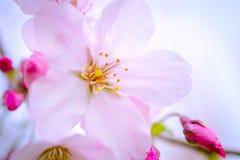 Fjädra i rosa färg Royaltyfri Foto