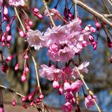 Fjädra in i rosa färger Arkivbild