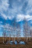Fjädra i Russia Arkivfoto
