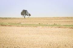 Fjädra jordbruks- fält med små gröna växter och lägga i träda p Royaltyfri Bild