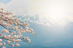 Fjädra körsbärsröda blomningar, rosa blommor, körsbärsröda blomningar Arkivfoto