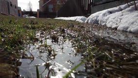 Fjädra landskapet, de sista insnöade avskilda ställena footage Den ljusa solen smälter snön Lövfällande träd utan sidor stock video