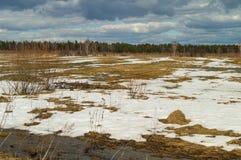 Fjädra landskapet, de sista insnöade avskilda ställena Lövfällande träd utan sidor Meltvatten från snön Royaltyfria Foton