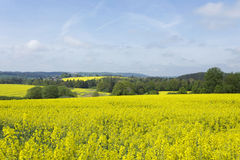 Fjädra landskapet i bohemiskt paradis med blommande flora Arkivbilder