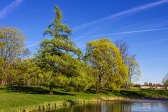 Fjädra landskapet med en gran och en sjö Fotografering för Bildbyråer