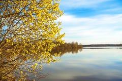 Fjädra landskapet med ett blomstra träd och floden Royaltyfri Fotografi