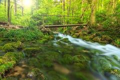Fjädra landskapet och träbron i skogen, Transylvania, Rumänien Royaltyfri Foto