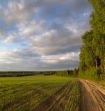 Fjädra landskapet, vägen längs kanten av skogen Arkivfoto