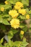 Den små blomman och lämnar in för att fjädra royaltyfria foton