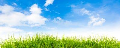 Fjädra naturbakgrund med gräs och blå himmel