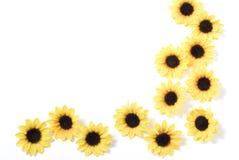 Fjädra och sommarbakgrund med blommor Royaltyfri Bild