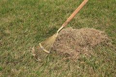 Fjädra omsorg för gräsmatta, den manuella scarificationen av gräsmatta med fanen krattar Arkivfoton