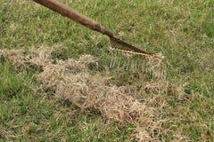 Fjädra omsorg för gräsmatta, den manuella scarificationen av gräsmatta med fanen krattar Royaltyfria Foton