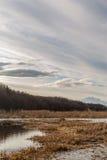 Fjädra på floden Fotografering för Bildbyråer