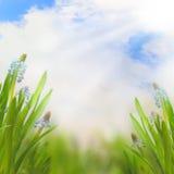 Fjädra påskbakgrund med härliga blommor Arkivfoton