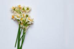 Fjädra påskliljabouqet på den vita bakgrunden med tomt utrymme Royaltyfria Bilder