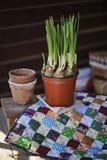 Fjädra pingstliljan och keramiska krukor på tygtäcket på trätabellen Royaltyfri Foto