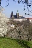Fjädra Prague den gotiska slotten och de gröna natur- och blomningträden, Tjeckien Fotografering för Bildbyråer