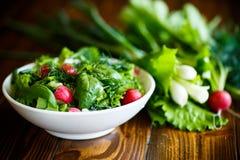 Fjädra sallad från tidiga grönsaker, grönsallatsidor, rädisor och örter Royaltyfria Foton