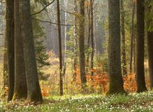 Fjädra skogen arkivbild