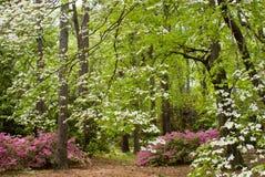 Fjädra skogen Arkivfoto