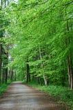 Fjädra skogen Arkivfoton