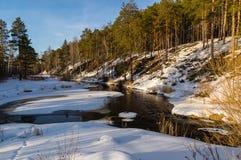 Fjädra skogen på bankerna av floden, Arkivbilder