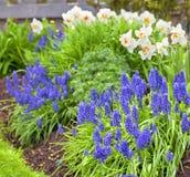 Fjädra trädgårds- blommor Royaltyfria Foton