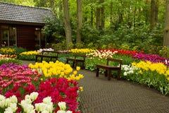 Fjädra trädgårds- Keukenhof, Holland Arkivfoton