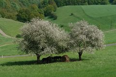 Fjädra Trees royaltyfri bild