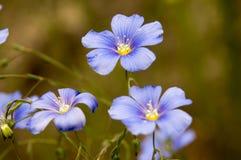 Fjädra wild blommor Arkivbild
