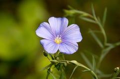 Fjädra wild blommor Arkivfoton