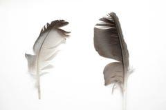 Fjädrar Royaltyfri Fotografi