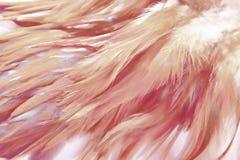 fjädrar Royaltyfri Foto