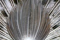 fjädrar Arkivbild
