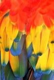 fjädrar Royaltyfria Foton