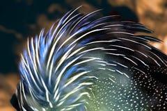 Fjädrar av en fågel arkivbild