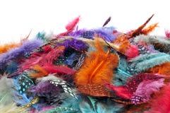 Fjädrar av olika färger royaltyfri fotografi