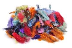 Fjädrar av olika färger arkivfoto