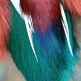 Fjädrar för mandarinand Fotografering för Bildbyråer