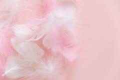 Fjädrar görar sammandrag bakgrund Bakgrund för design med den mjuka colorfullfjädermodellen Mjuka fluffiga fjädrar på arkivfoto