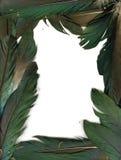 fjädrar inramniner korpsvart Royaltyfri Bild