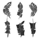 fjädrar isolerade objekt över setwhite Royaltyfri Bild