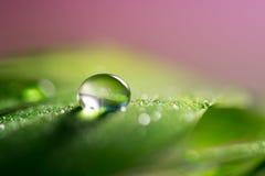 Fjädrar med en droppe av vatten med en trevlig grön färg Makrofjäder Royaltyfri Fotografi