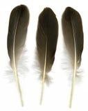 fjädrar tre Royaltyfri Bild