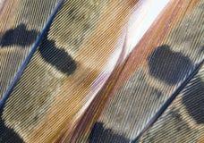 fjädrar två Royaltyfria Foton