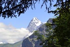 Fjällängar för monteringseigerschweizare Royaltyfri Fotografi