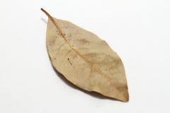 fjärd isolerad leaf Royaltyfria Foton