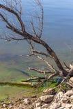 Fjärd med ruttet vatten arkivbilder